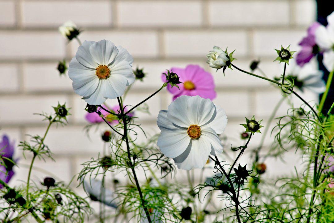 Blumen Läuse