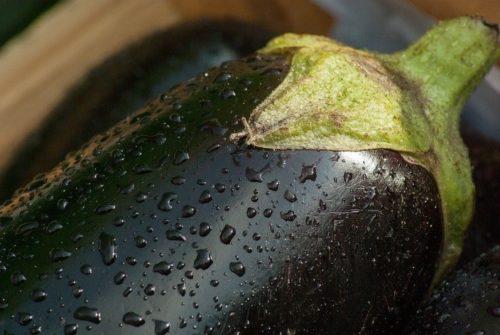 Blattläuse an Auberginen